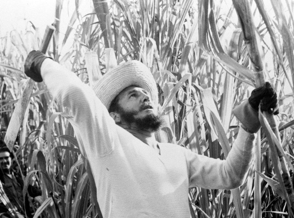 El 23 de febrero de 1961, el presidente cubano se esforzaba en cortar cañas con cientos de voluntarios. Las autoridades dirían después que Castro había cortado 9.000 libras de cañas.
